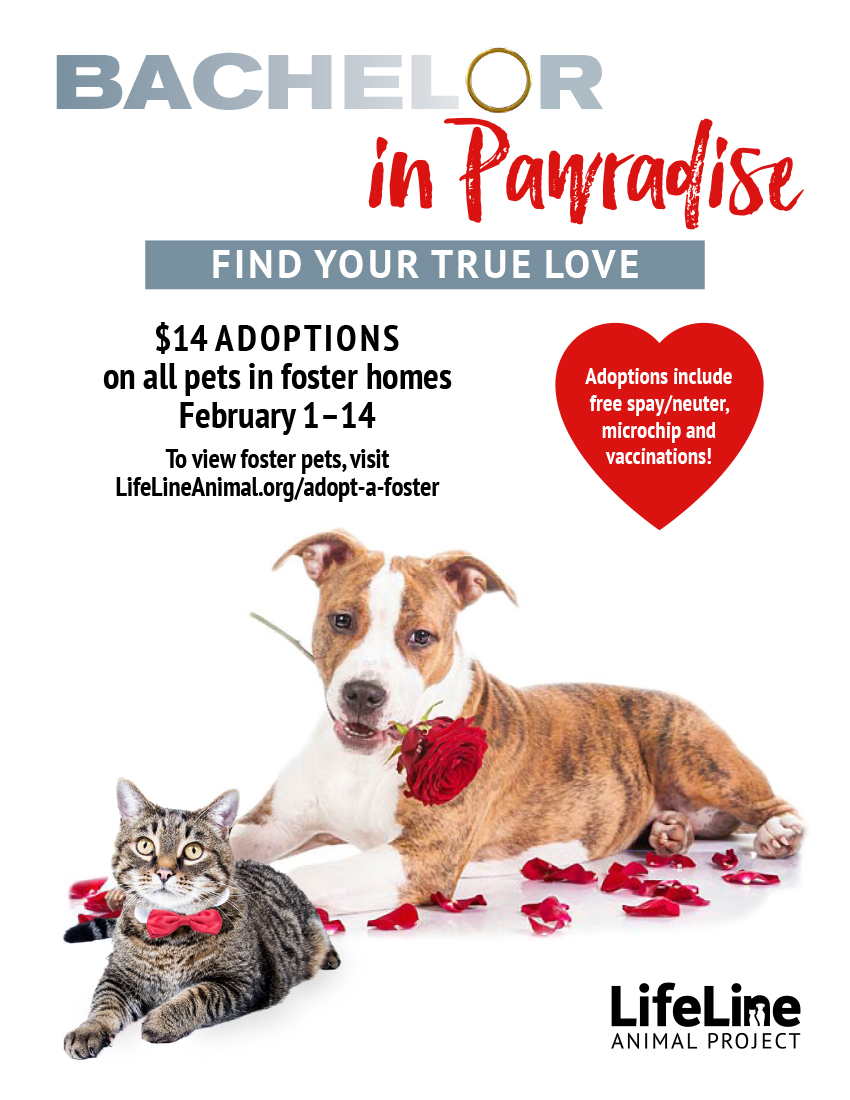 bachelor in paradise animal adoption